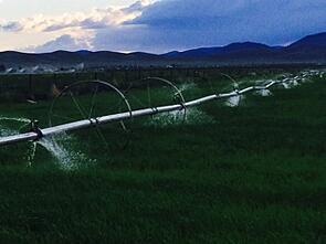 irrigating_field