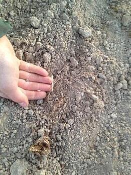 fresh_soil