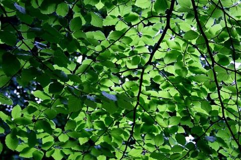 Great Harvest Burlington, VT Guest Post: The Green Explosion