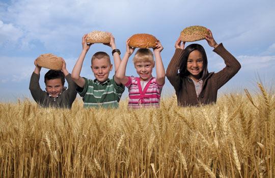 wheat field with kids photo