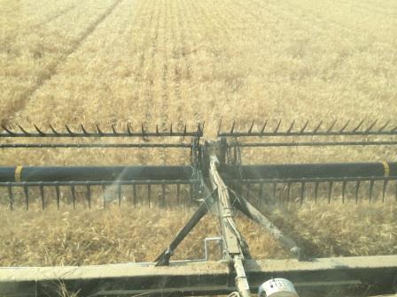 wheat_combine_WEB