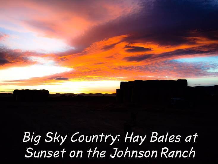 """Montana Grain Farming """"Till the Cows Come Home"""""""