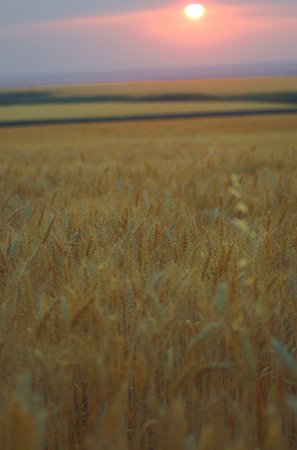 field_sunset_photo.preview