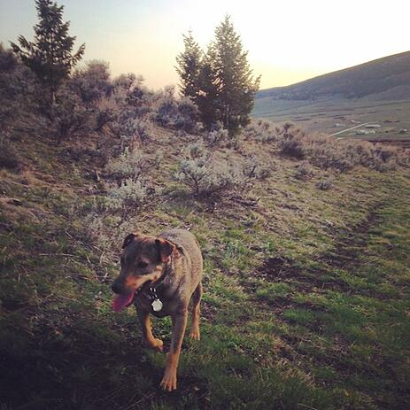 dog on hike