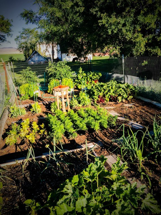 Growing Gardens and Businesses