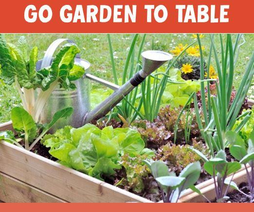 Get Garden to Table Benefits - It's Not Too Late!