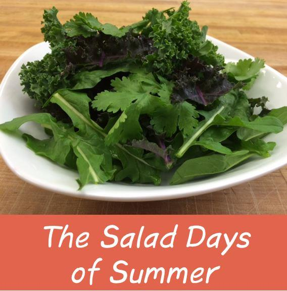 From Iceberg to Backyard Baby Greens: The Salad Days of Summer