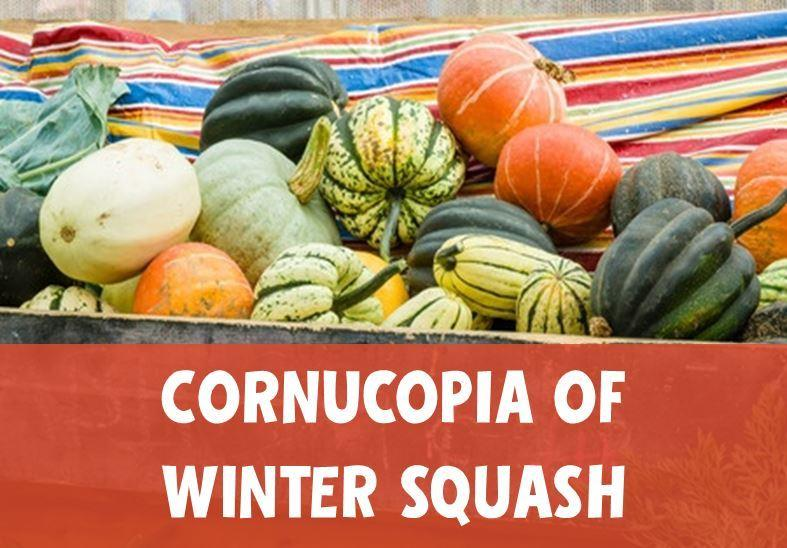 Winter Squash is a Highlight of the Changing Seasons